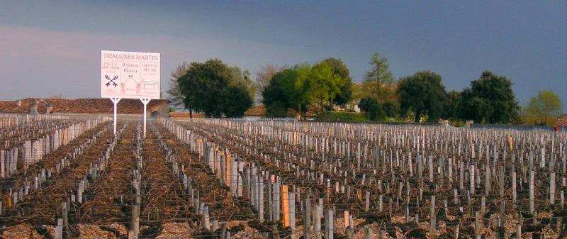 Bordeaux-Weinreben von Domaines Martin